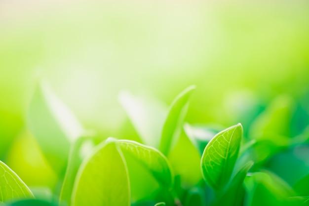Sluit omhoog mooie mening van aard groene bladeren op de vage achtergrond van de groenboom