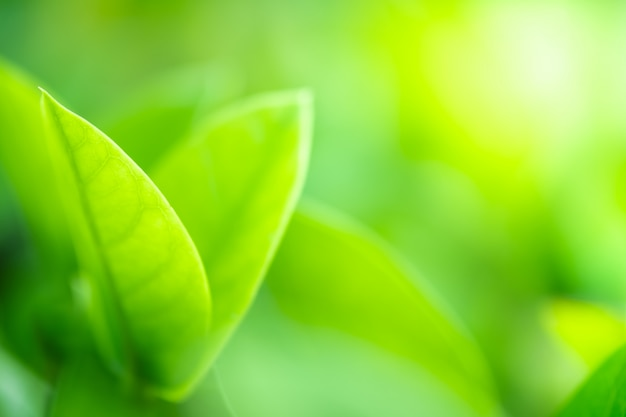 Sluit omhoog mooie mening van aard groene bladeren op vage groenboom met zonlicht in openbaar tuinpark.