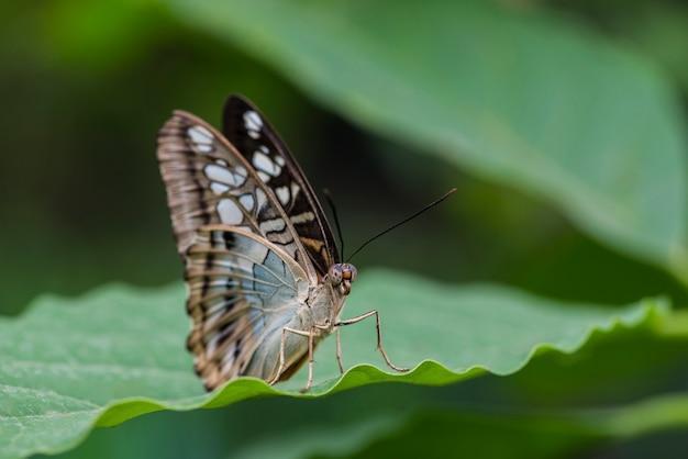 Sluit omhoog mooie vlinder op blad