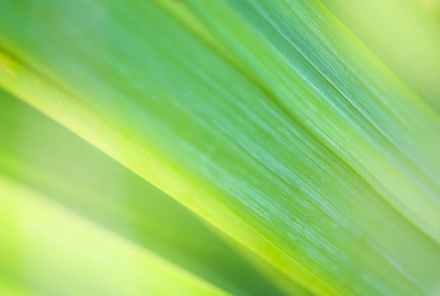 Sluit omhoog natuurlijk groen blad en groen vage achtergrond