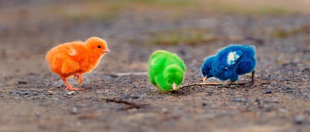 Sluit omhoog nieuw - geboren groen kippenrood