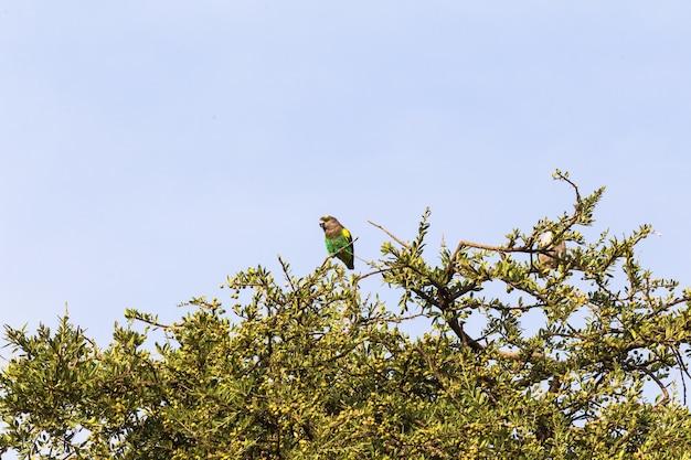 Sluit omhoog op bruine papegaai op de boom