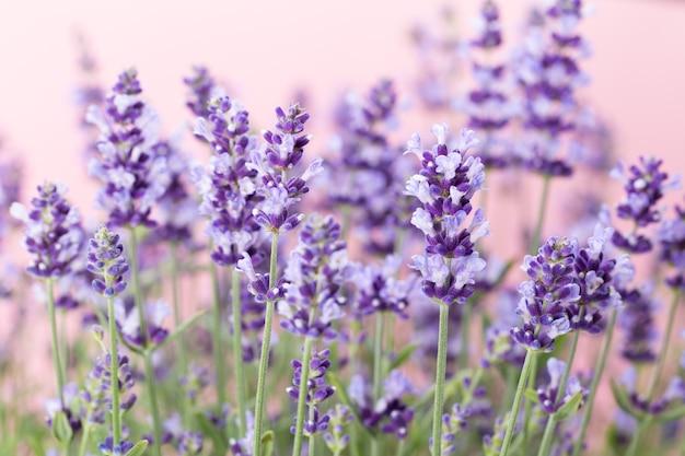 Sluit omhoog op de details van lavendelbloemen
