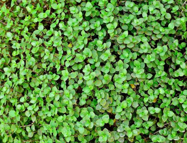 Sluit omhoog op de groene achtergrond van de bladerentextuur
