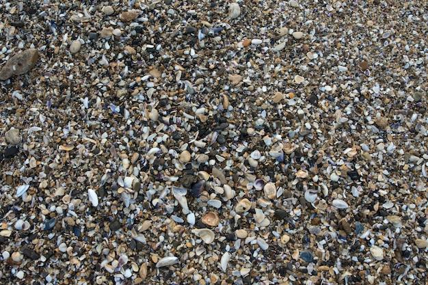 Sluit omhoog op ea shells stenen details