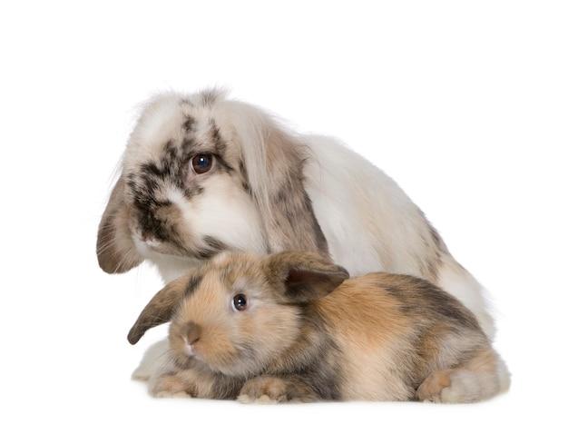Sluit omhoog op geïsoleerd konijn