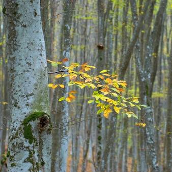 Sluit omhoog op gele bladeren aan de de herfstboom