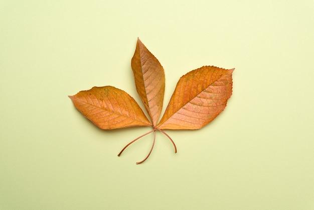 Sluit omhoog op gele geïsoleerde kersenbladeren