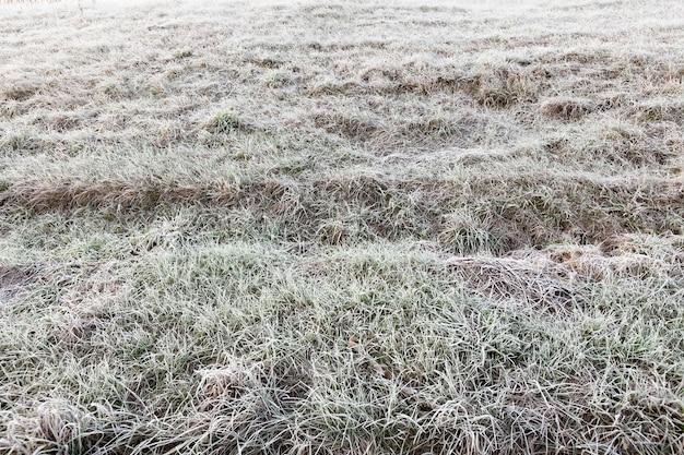 Sluit omhoog op gras in de winter