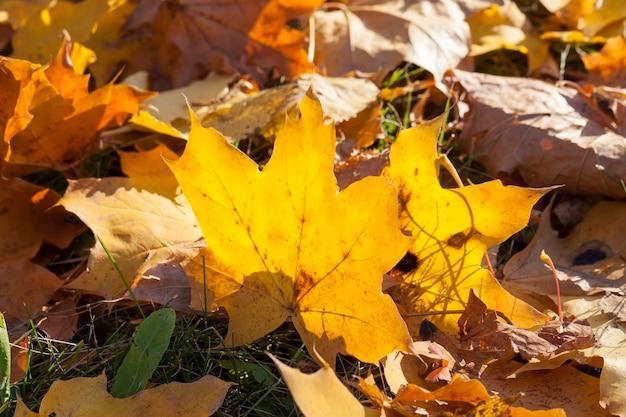 Sluit omhoog op het gele gebladerte van de herfst