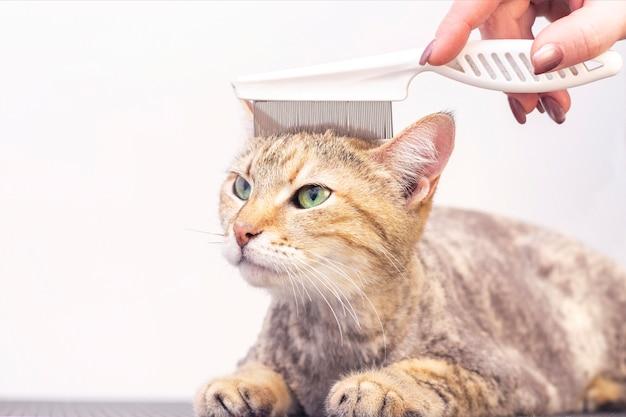 Sluit omhoog op het verzorgen van kat in de huisdierensalon