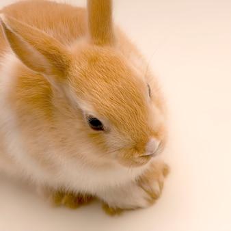 Sluit omhoog op konijn dat recht vooruit kijkt