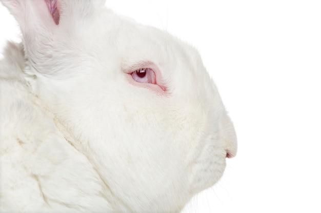 Sluit omhoog op mooi geïsoleerd konijn