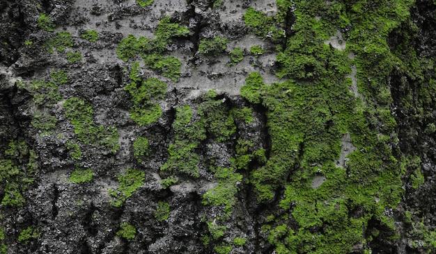 Sluit omhoog op schors van een boom met groen mos