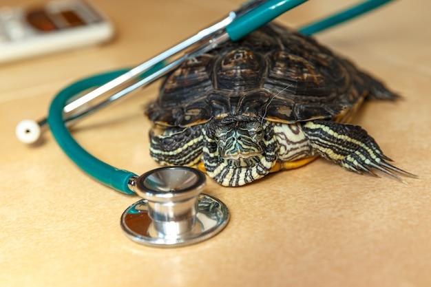 Sluit omhoog op stethoscoop en redeared-schildpad