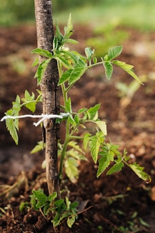 Sluit omhoog plant in de tuin wordt uitgezet die