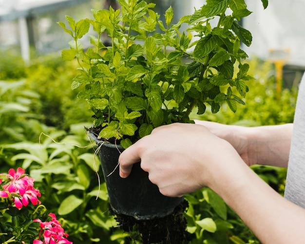 Sluit omhoog plant omhoog worden gesteund