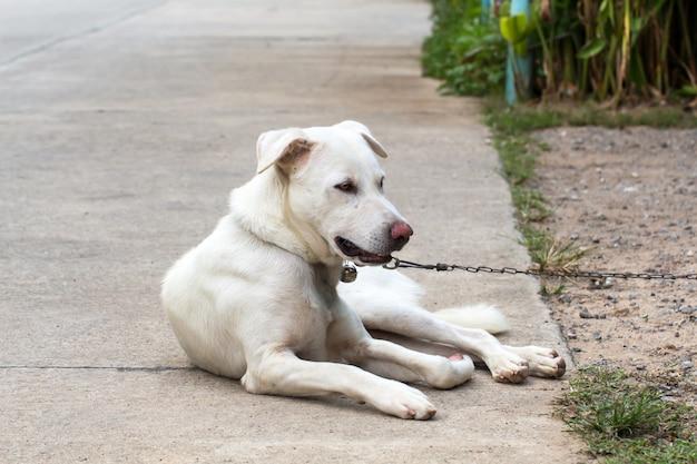 Sluit omhoog portret van een verdwaalde hond op zijgang
