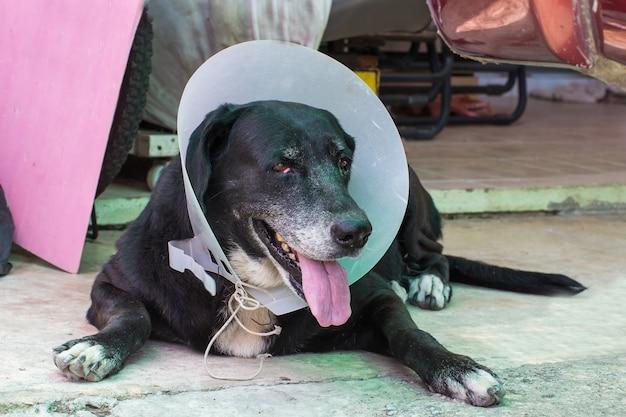 Sluit omhoog portret van een zieke hond, zieke hond