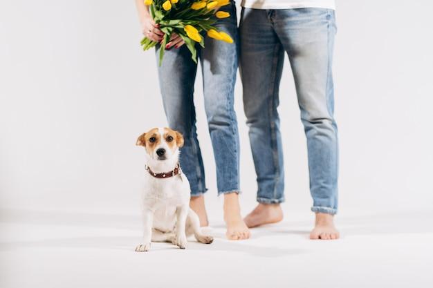 Sluit omhoog portret van hond met gele bloemen dat op witte achtergrond met mooi erachter paar wordt geïsoleerd. valentijnsdag vieren, vrouwendag. liefde en gelukkig familieconcept.