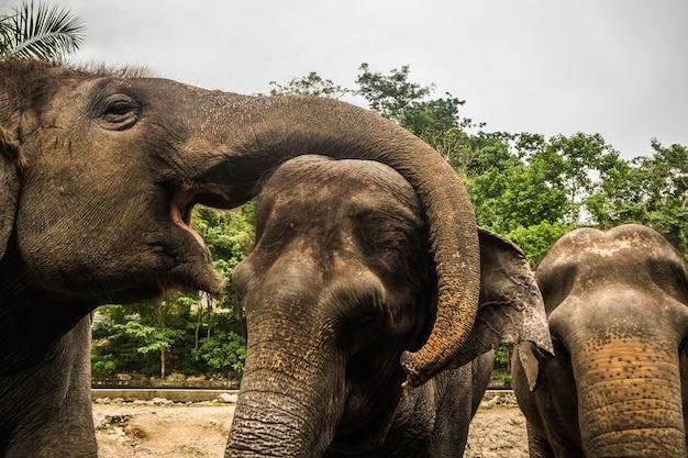 Sluit omhoog portret van olifant azië