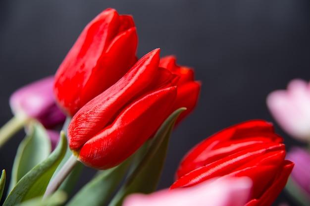 Sluit omhoog rode tulpen op donker
