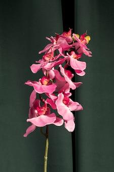 Sluit omhoog roze orchidee naast gordijn