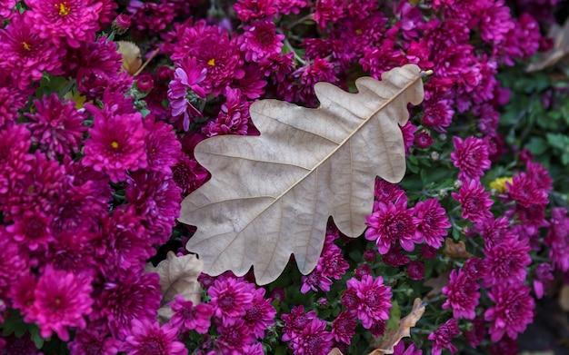 Sluit omhoog roze struik met eikenblad