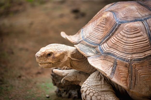 Sluit omhoog schildpadden die op gras lopen