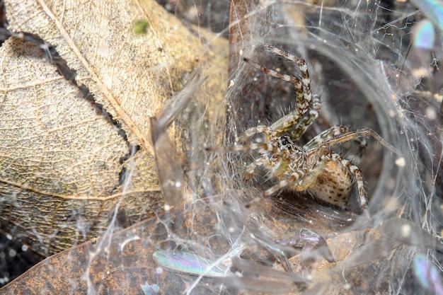Sluit omhoog spin op spinneweb in bladhol bij aard thailand