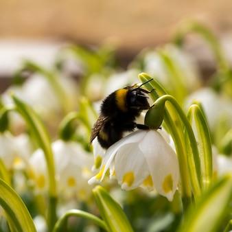 Sluit omhoog stuntel bijenslaap op een bloem