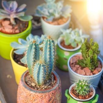 Sluit omhoog succulents in pottenlandschap
