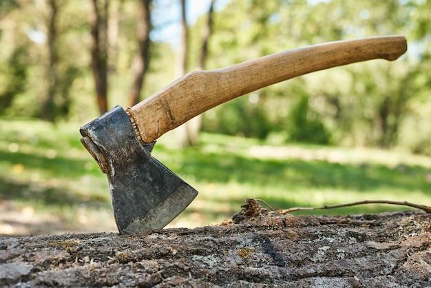 Sluit omhoog van bijl in gevelde boom in het bos