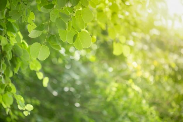 Sluit omhoog van blad van de de orchideeboom van de aardmening het groene op vage groenachtergrond