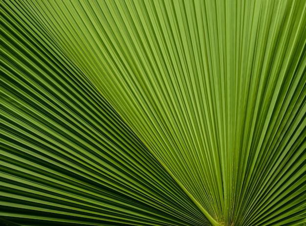 Sluit omhoog van bladerentextuur of achtergrond