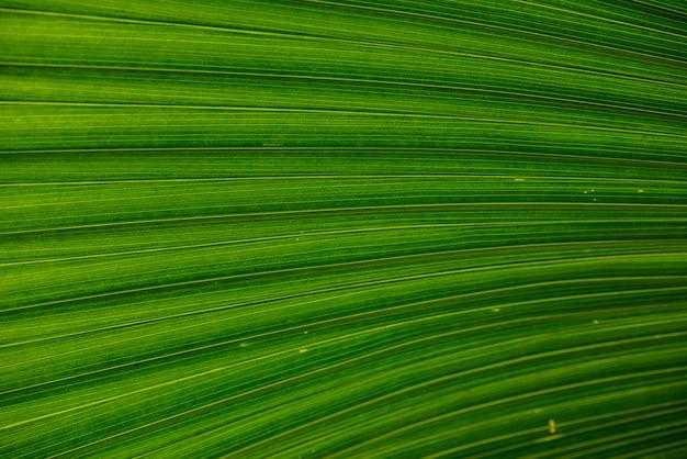 Sluit omhoog van bladerentextuur of oppervlakte