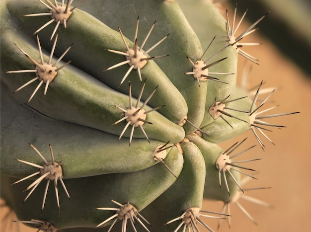 Sluit omhoog van bol gevormde cactus met lange doornen