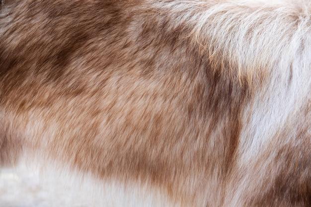 Sluit omhoog van bruine hondenbonttextuur en achtergrond