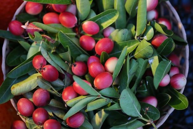 Sluit omhoog van carissa l. tropisch fruit van carissa
