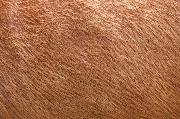 Sluit omhoog van de bruine zachte achtergrond van de woltextuur.