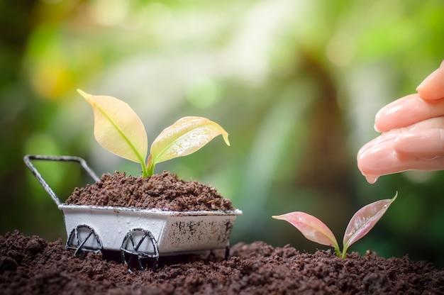 Sluit omhoog van de hand die van de vrouw en jonge planten in de tuin voeden water geven, installaties die op wielkruiwagen groeien