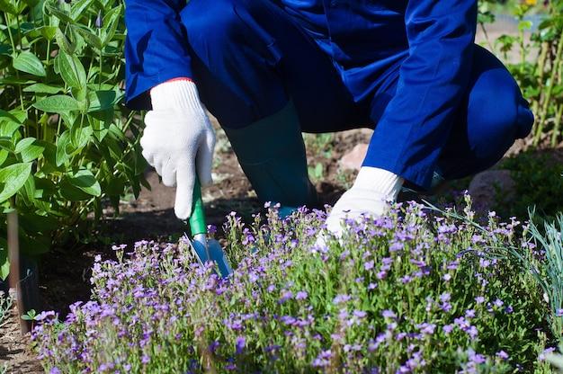 Sluit omhoog van de handen van de landbouwer die een phlox-subulaat plant