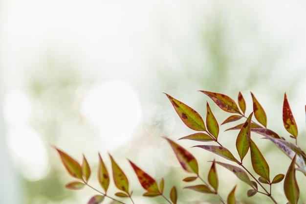 Sluit omhoog van de herfst groen en rood blad van de aardmening op vage groenachtergrond onder zonlicht met bokeh en exemplaarruimte.