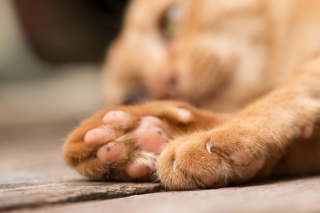 Sluit omhoog van de poot van de kat