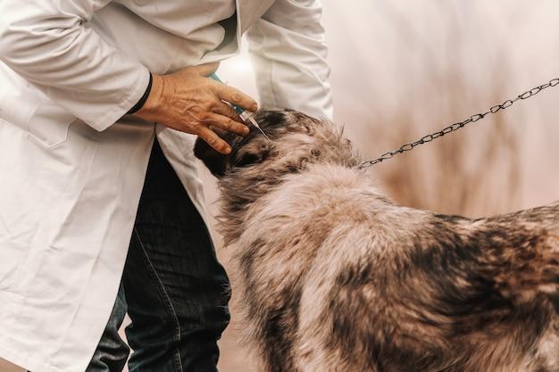 Sluit omhoog van dierenarts in witte laag die vaccin geeft aan hond. landelijk exterieur.