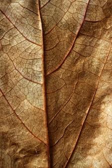 Sluit omhoog van een blad, gloden bruin in de herfst
