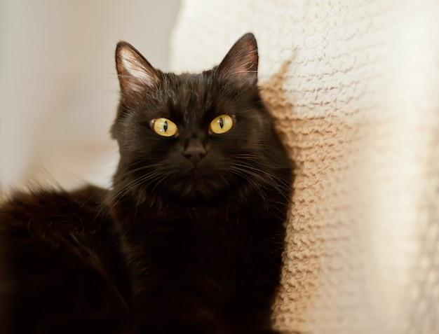 Sluit omhoog van een zwarte kat die camera bekijkt