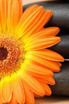 Sluit omhoog van een zwarte stenenstapel en een oranje zonnebloem