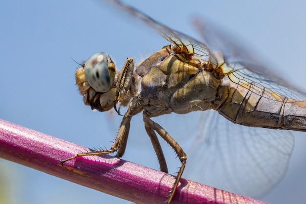 Sluit omhoog van gevleugeld insect op takje