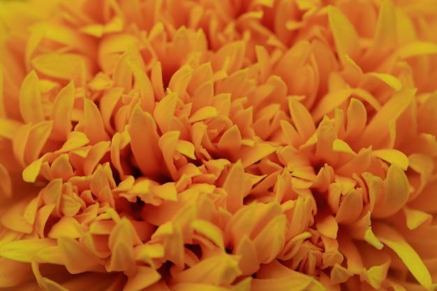 Sluit omhoog van goudsbloembloem